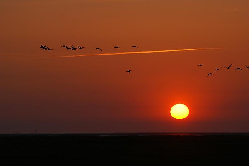 Sonnenuntergang an der Westküste